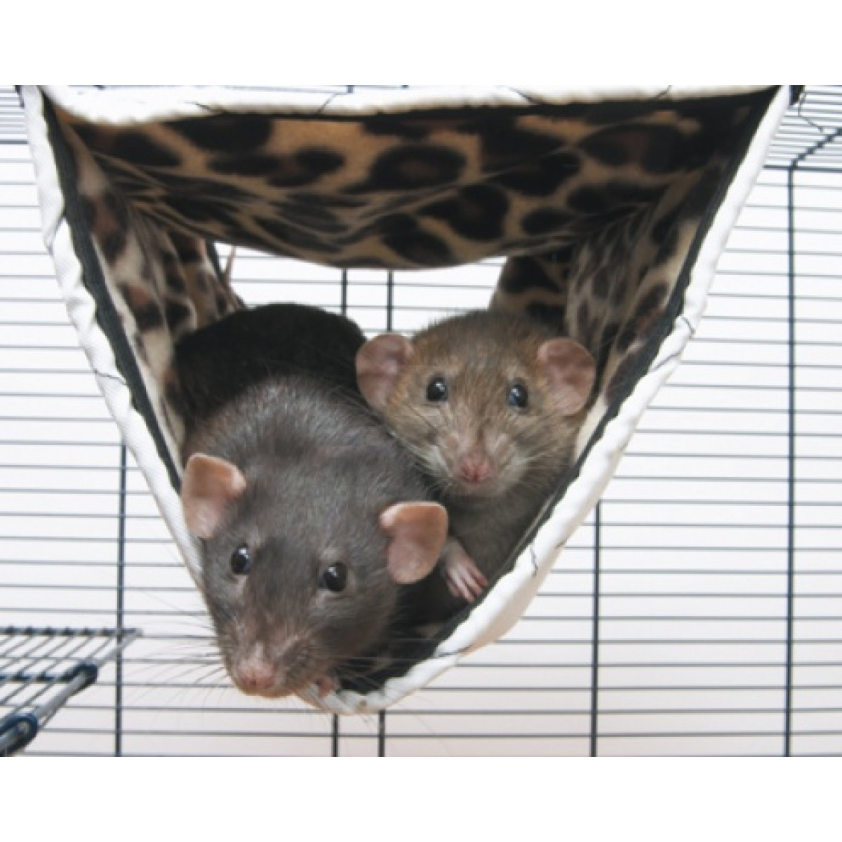 Гамаки для декоративных крыс своими руками