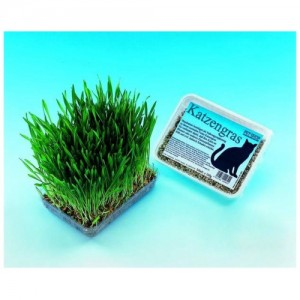 Nobby Cat Grass 100g