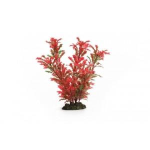 IPTS aquarium plants