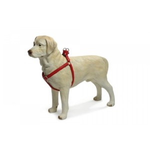 IPTS suspenders for dogs red 20*50-75 red