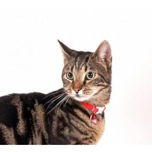 Karlie SIMON CAT kaelarihm pun.31x10cm